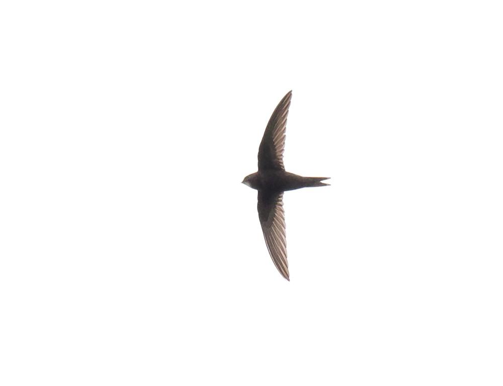 148  Swift